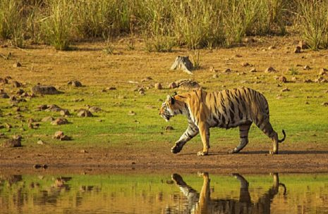 Bardia National Park Safari Package