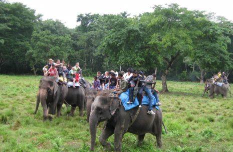 Wildlife Safari in Chitwan