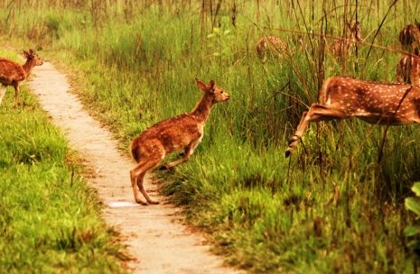 Chitwan 3 days tour gives perfect wildlife safari in Chitwan