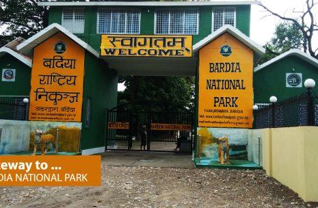 Wildlife Safari in Bardia