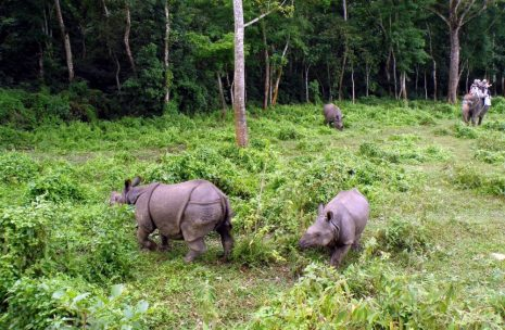 Bardia National Park Package