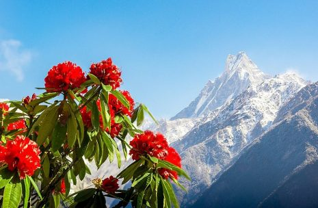 Bhutan, Nepal and Tibet Tour