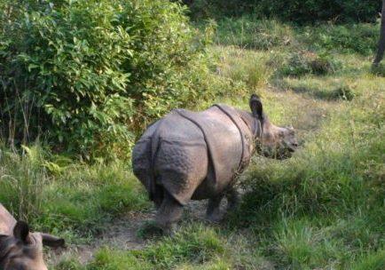 Wildlife Activities in Nepal